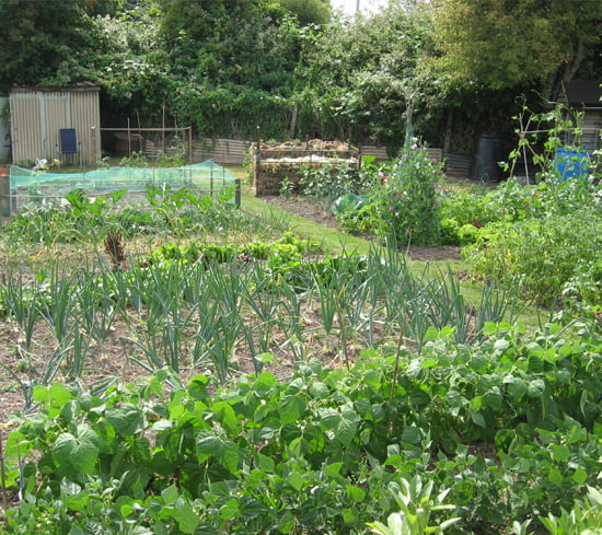 Hereford Garden Allotments