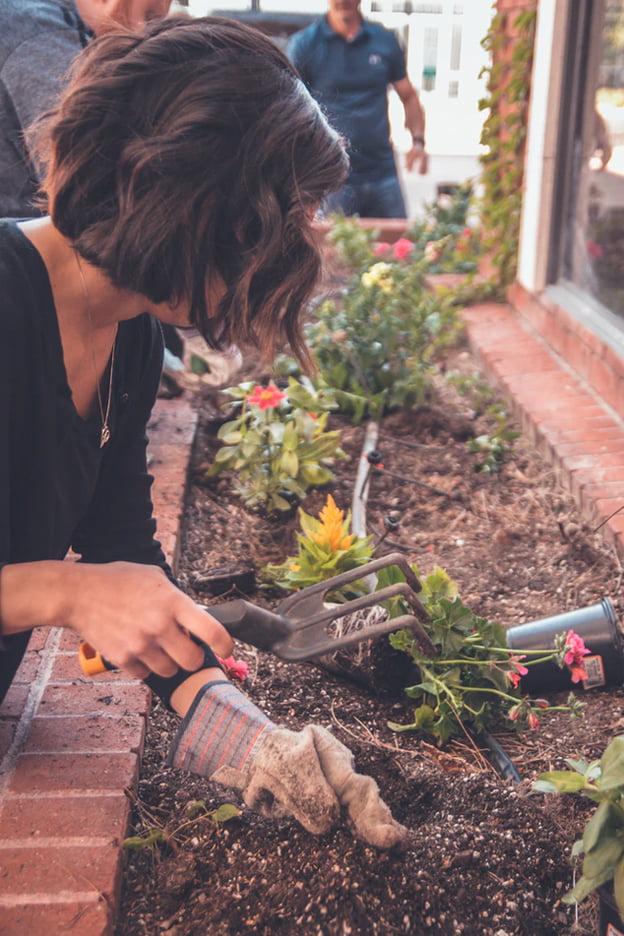 Garden Alotments